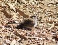 Dove_Diamond_2011-06-08
