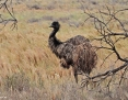 Emu_2014-10-06