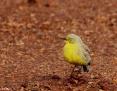 Gibberbird_2012-06-28