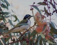Honeyeater_Bluefaced_2012-11-10
