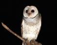 Owl_Eastern_Barn_2014-12-01