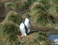 Penguin_Gentoo_2010-10-25_3