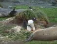 Penguin_Gentoo_2010-11-12