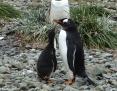 Penguin_Gentoo_2010-11-15