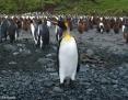 Penguin_King_2010-11-02