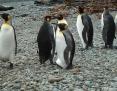 Penguin_King_2010-11-25