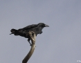 Raven_Forest_2010-02-13