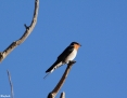 Swallow_Welcome_2013-04-26_1