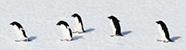 Marine Ornithology