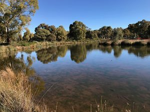 Oaklands Reserve, Oaklands Wetlands