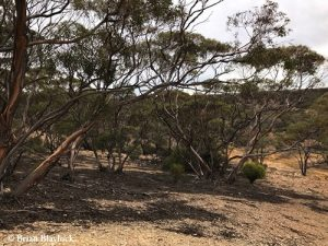 Shell Hill Reserve