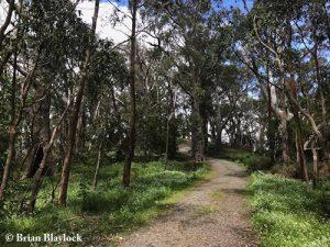 The Knoll Conservation Park - habitat