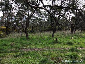 Tangari Regional Park  vegetation